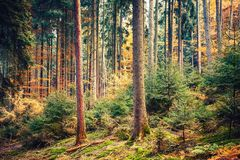 Autumn forest in Germany. Colorful autumn forest in Germany Stock Images