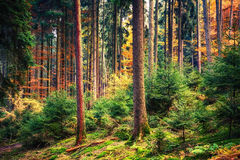 Autumn forest in Germany Stock Images