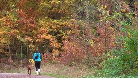 Autumn 2018. Autumn in the forest. Girl - the athlete runs along the forest road. stock video footage