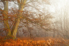 Autumn Forest Glade Stock Image