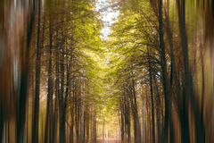 Autumn forest golden farirytale blur Royalty Free Stock Photo