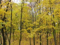 Autumn forest. Gomel. Autumn in the Gomel Park. Belarus Royalty Free Stock Photo