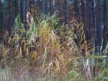 Autumn Forest Grass Photographie stock
