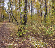 Autumn forest. Green and yellow trees Stock Photo