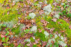 Autumn forest ground with leaves and moss. Stock Photos