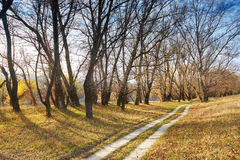 Autumn forest and ground road near river, beautiful landscape Royalty Free Stock Photo