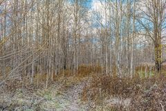 Late Autumn In Forest Stock Photo