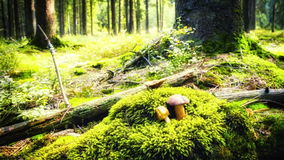 Autumn forest with growing mushrooms. Slider shot stock video footage