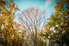 Autumn forest. Head tree among the trees in the foliage Stock Photography
