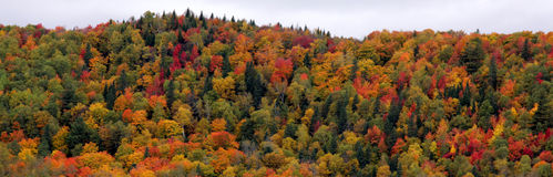 Autumn Forest on a Hill Stock Images