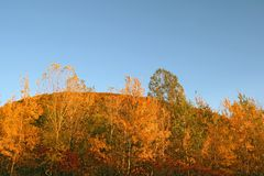Autumn forest on a hill Royalty Free Stock Image