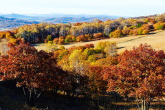 The autumn forest and hills on the meadow Stock Photos