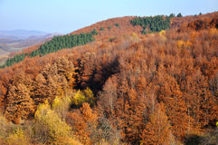 Autumn forest on the hills Royalty Free Stock Photo