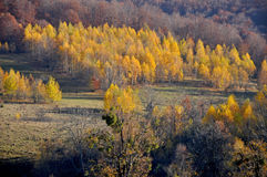 Autumn forest on the hills Royalty Free Stock Photography