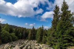 Autumn forest on hillside. beautiful nature. stock photos