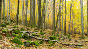 Autumn forest on the hillside. Stock Images