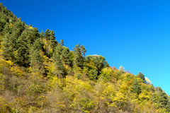 Autumn forest on the hillside. Autumn in the mountains of the North Caucasus stock photography