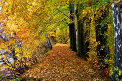 Autumn forest, horizontal Royalty Free Stock Images