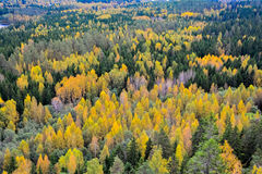 Autumn forest III. Forest landscape in autumn landscape Stock Image