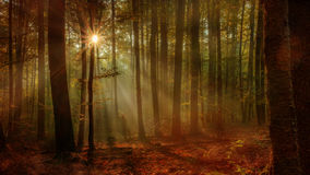 Autumn Forest incantato immagine stock