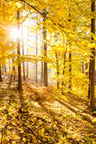 Autumn forest inspirational landscape, fall scenery. Royalty Free Stock Images