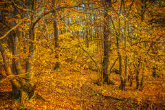 In autumn forest instagram stile Stock Photography