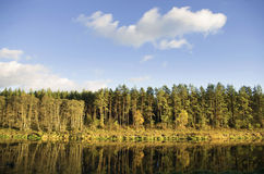 Autumn forest and its reflection in river Royalty Free Stock Photos