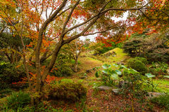 Autumn forest in Japan Royalty Free Stock Photo