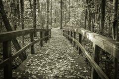 Autumn Forest Journey Stock Photos