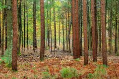 Autumn in the Forest. Just a typical Autumn afternoon in a Wisconsin forest Stock Images