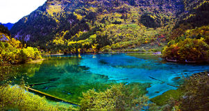 Autumn forest and lake,Jiuzhaigou Royalty Free Stock Images