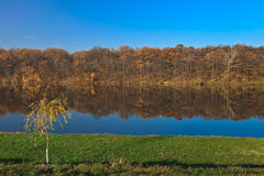 Autumn forest on a lake Royalty Free Stock Image