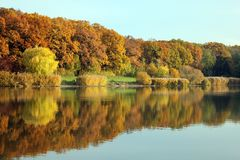 Autumn forest at the lake stock images