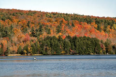 Autumn forest  with lake Stock Image