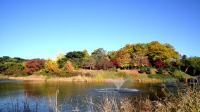 Autumn forest. Lake. Autumn Landscape. Real time. Olympic Park in Seoul, South Korea