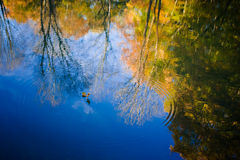 Autumn in the forest. By a lake with a bridge over Stock Images