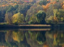 Autumn on the forest lake: green, yellow and red trees are reflected in the mirror of water, a strip of thickets of yellowed reeds Royalty Free Stock Photo