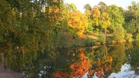 Autumn Forest Lake Hösten landskap 4K stock video