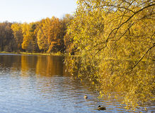 Autumn, forest and lake. Autumn landscape with lake and yellow forest on bank, recorded on Red lake in Izmaylovskiy park in Moscow Stock Photo