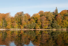 Autumn forest and lake Royalty Free Stock Image