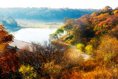 The autumn forest and lake Royalty Free Stock Images