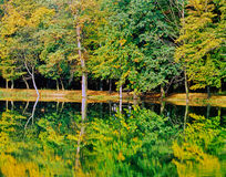 Autumn Forest with Lake Royalty Free Stock Images