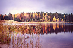 Autumn forest and lake Stock Image