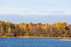 Autumn forest lake shore Stock Photography