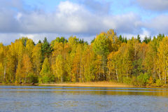 Autumn forest on the lake. Stock Photography