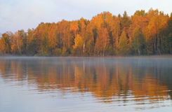 Autumn forest on the lake at sunrise. Royalty Free Stock Image