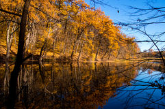 Autumn in the forest with lake. Yellow leaves. October Stock Images
