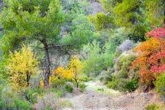 Autumn Forest landscape stock photos