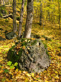 Autumn forest landscape stock image