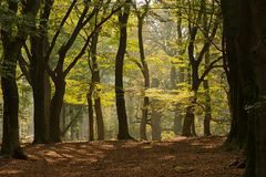 Autumn forest landscape Royalty Free Stock Photo